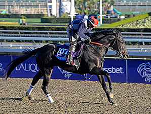 Dance with Fate - Breeders' Cup 2013