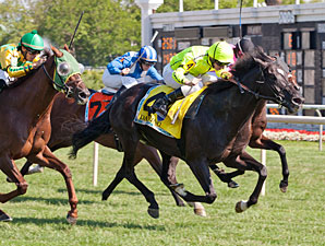 Dandino wins the 2013 American St. Leger Stakes.