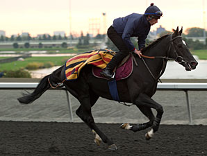 Dandino - Woodbine, October 9, 2012.