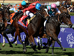 Dank wins the 2013 Breeders Cup Filly and Mare Turf