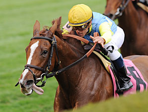 Dayatthespa wins the 2012 Queen Elizabeth II Challenge Cup.