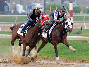 Dean's Kitten works with Age Of Humor on April 23, 2010.