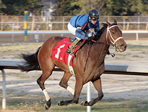 Decelerator wins the 2010 Martha Washington.