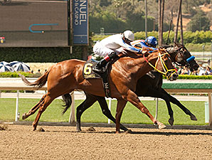 Declassify wins the 2014 Triple Bend at Santa Anita.