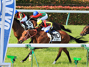 Deep Brillante wins the 2012 Japanese Derby.