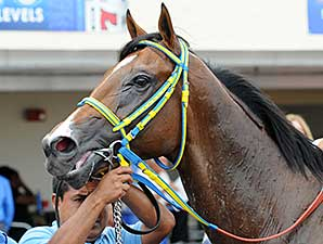 Dekabrist wins the 2014 Kodiak Island Stakes.