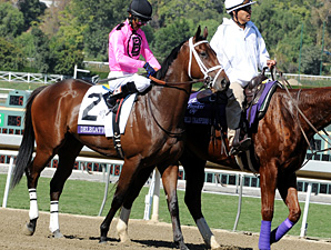 Delegation prior to the Breeders' Cup Dirt Mile.