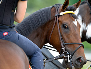 Departing - Pimlico, May 16, 2013