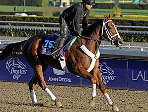 Designer Legs - Breeders Cup - October 31, 2013