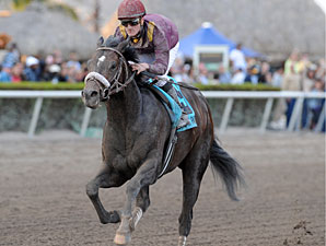 Dialed In racing in the 2011 Holy Bull Stakes.
