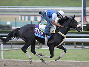 Diamond Bachelor at Santa Anita for the Breeders' Cup.