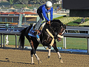 Diamond Bachelor - 2013 Breeders' Cup, October 30, 2013.