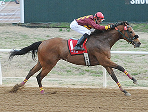 Diamond Lucy wins the 2014 Wilma Mankiller Memorial Stakes.