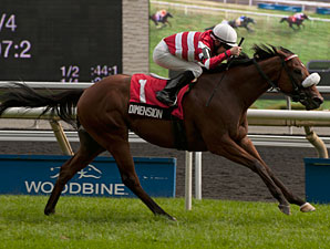 Dimension wins the 2013 Play the King Stakes.