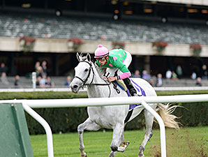 Discreet Marq wins the 2014 Ticonderoga Stakes.