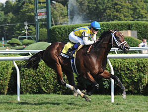Dominus wins the 2012 Bernard Baruch.
