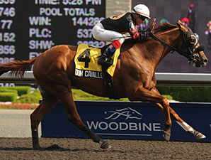 Don Cavallo wins the 2011 Dominion Day Stakes.