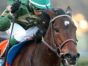 Don't Tell Sophia wins the 2013 Pippin Stakes.