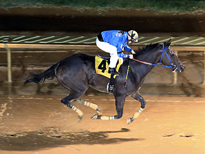 Down Town Allen wins the 2013 Ann Hilton Handicap.