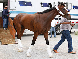 Dreaming of Julia arrives at Churchill Downs on April 8, 2013.