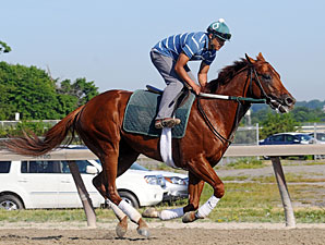Drosselmeyer at Belmont Park on June 2, 2010.