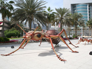 Ants in Dubai (Photo Credit: Michele MacDonald)