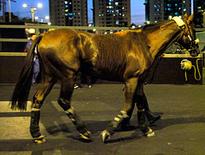 Durban Thunder arrives in Hong Kong, December 3, 2011.