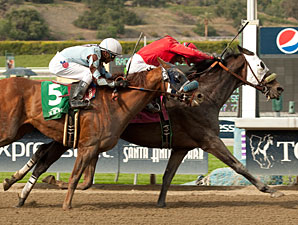 Dynamic Host wins the 2012 Tokyo City Cup.