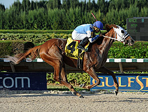 East Hall wins the 2014 Millions Classic Preview Stakes.
