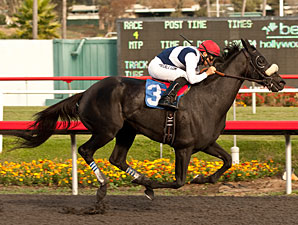 Eblouissante Maiden Win November 16, 2012.