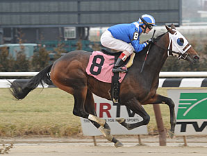 Elnaawi - Maiden win January 12, 2013.
