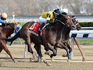 Empire Dreams wins the 2013 New York Stallion Series - Great White Way.
