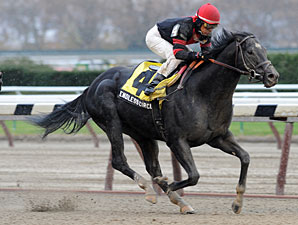 Endless Circle wins the 2010 Fall Highweight.
