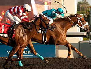 Essence Hit Man wins the 2013 Bold Venture Stakes.