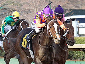 Euphrosyne wins the 2014 Honeybee.