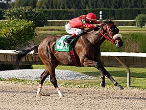 Evolution Rocks wins the 2014 Thrillin Discovery Handicap.