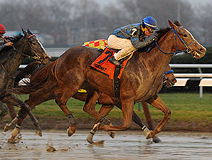 Expression wins the 2014 Garland of Roses Stakes.