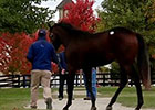 Fasig-Tipton October Yearling Sale Wrap - Day 2