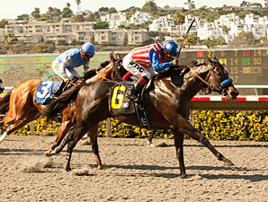 Fed Biz wins the 2013 Pat O'Brien.