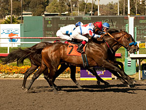 First Dude wins the 2011 Hollywood Gold Cup.