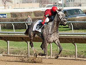 Flashy American wins the 2014 Sixty Sails Handicap.