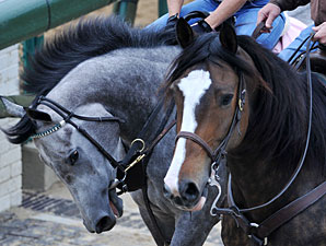 Flashy Gray - Churchill Downs, April 29, 2013.