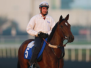 Flotilla preps for the Dubai World Cup race card March 24.