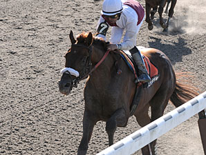 Fly Down wins the 2010 Dwyer.