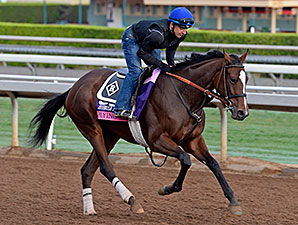 Flying Tipat works towards the Breeders' Cup.