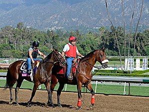 Flying Tapit preps for the 2014 Breeders' Cup.