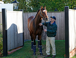 Frankel at Banstead Manor
