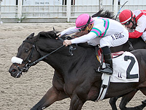 Gantry wins the 2013 Thanksgiving Handicap.