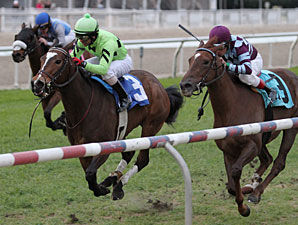 Gator Zone wins the 2013 Allen LaCombe Memorial Stakes.