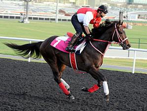 Genten - Dubai 2012